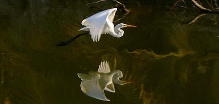 بازتاب نور و پرندگان